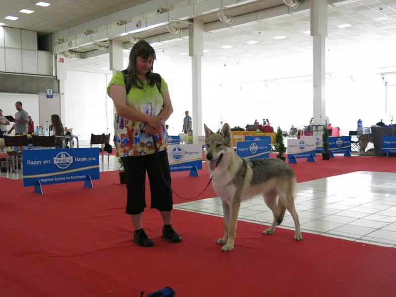 i was there with wolfdog ii od a hoa ta a nine month old puppy he succeeded winning the world special puppy winner title as this was his first big show i